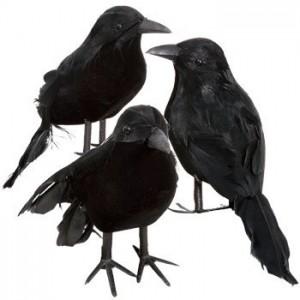 Halloween-Costume-Zone.com - Halloween Bird Watching – The Dark Side