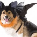 Halloween-Costume-Zone.com - Dressing Doggy Up For Halloween